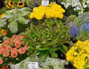 Flowers for sale in the Bloemenmarkt in Amsterdam