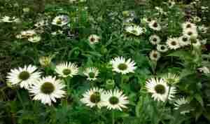 Flowers between Naarden and Muiden