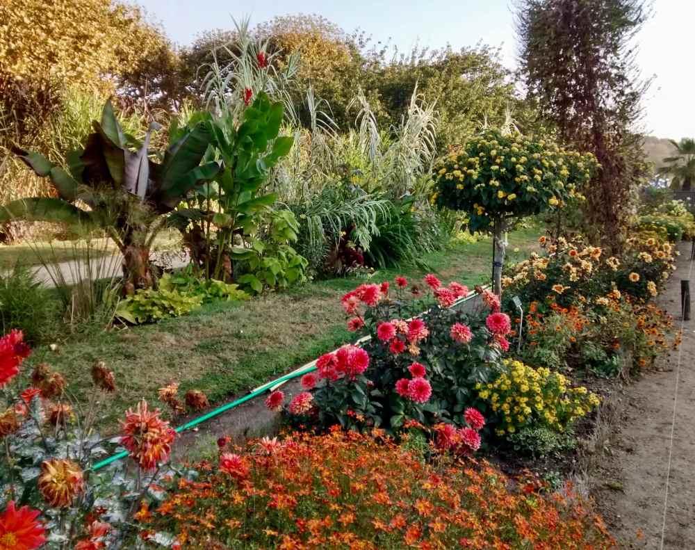 jardindesPlantes1